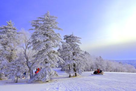 <哈尔滨+亚布力+雪地温泉+冰雪画廊+梦幻家园+雪乡3日游>5S雪场畅滑4小时,1晚森林温泉,1晚暖炕,高标美餐,行摄亚雪美景,无忧出行