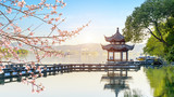 a blooming tree,Beautiful architectural landscape and landscape in West Lake, hangzhou