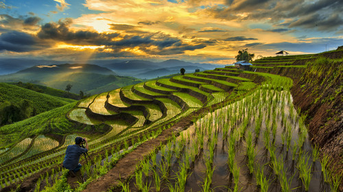 A Photographer take a caption of beautiful step of rice teerace during sunset in Chiangmai, Thailand