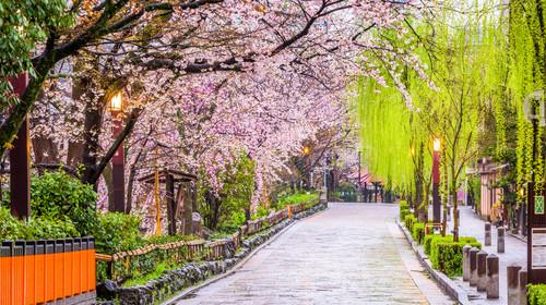 Gion Shirakawa, Kyoto, Japan in spring.