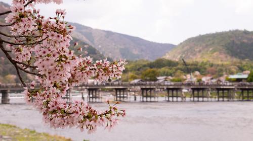 Togetsukyo Bridge with Sakura, Arashiyama