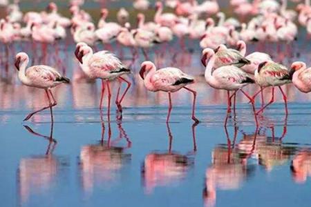 <埃塞俄比亚-博茨瓦纳-赞比亚-津巴布韦机票+当地7日游>维多利亚瀑布,大树村,国家公园越野车猎趣,快艇游乔贝河,广州ET