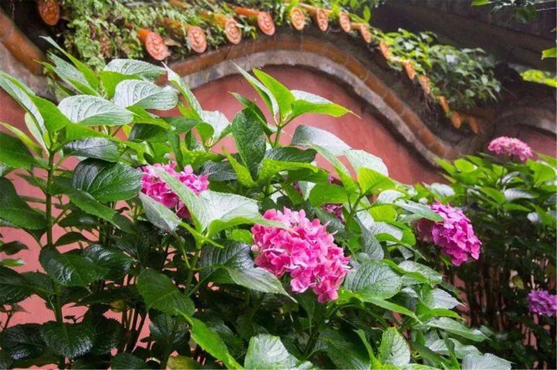 寺庙花风景