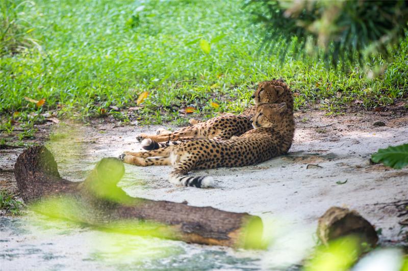 新加坡精华景点丨4大动物园