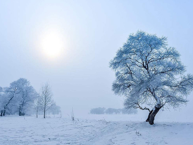 """<吉林雾凇岛2日自驾导航路线>每当雾凇来临,吉林松花江岸十里长堤""""忽如一夜春风来,千树万树梨花开"""""""
