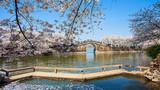 江苏省无锡太湖鼋头渚樱花