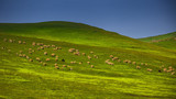 新疆巴音布鲁克草原风光