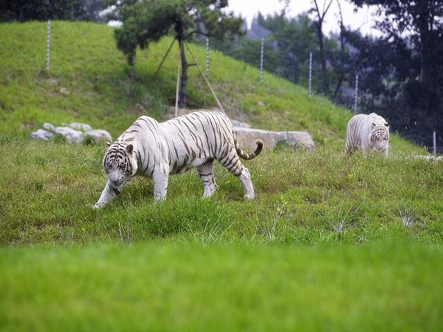 北京野生动物园1日游>和小动物零距离接触的体验之旅