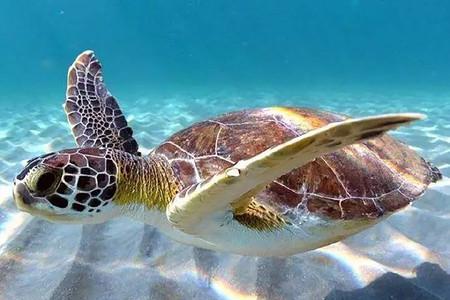 <印度尼西亞美娜多5日或6日游>全程海邊酒店,耶穌飛天像,布納肯海洋生態保護區,與海洋親密接觸,藍鯨島