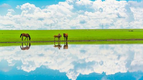 内蒙古呼伦贝尔市莫尔格勒河边上的马匹