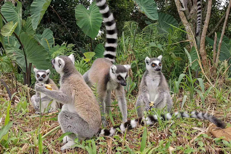 <馬達加斯加+肯尼亞+坦桑尼亞+埃塞俄比亞19日16晚跟團游游>一價全含全程7晚五星6晚四星3晚特色酒店