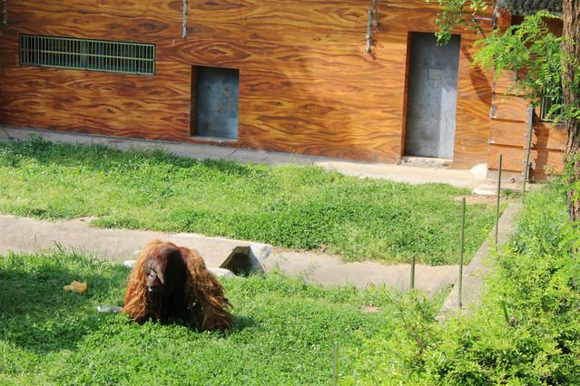 【途牛首发】#猎艳行动#南京也能看到考拉啦!红山动物园全景游