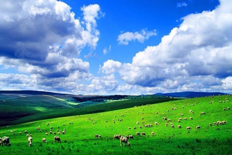 呼伦贝尔六日游 一半草原 一半森林 攻略 美图