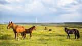 Huitengxile grassland image
