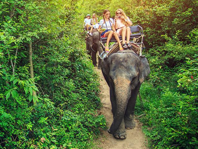 <【苏梅岛放松之旅骑大象】>可搭看瀑布,多种选择,一日游或半日游可选