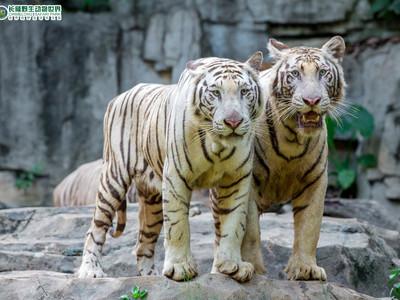 長隆野生動物世界