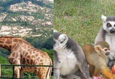 青岛黄岛野生动物园