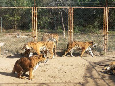 北京野生动物园怎么样?
