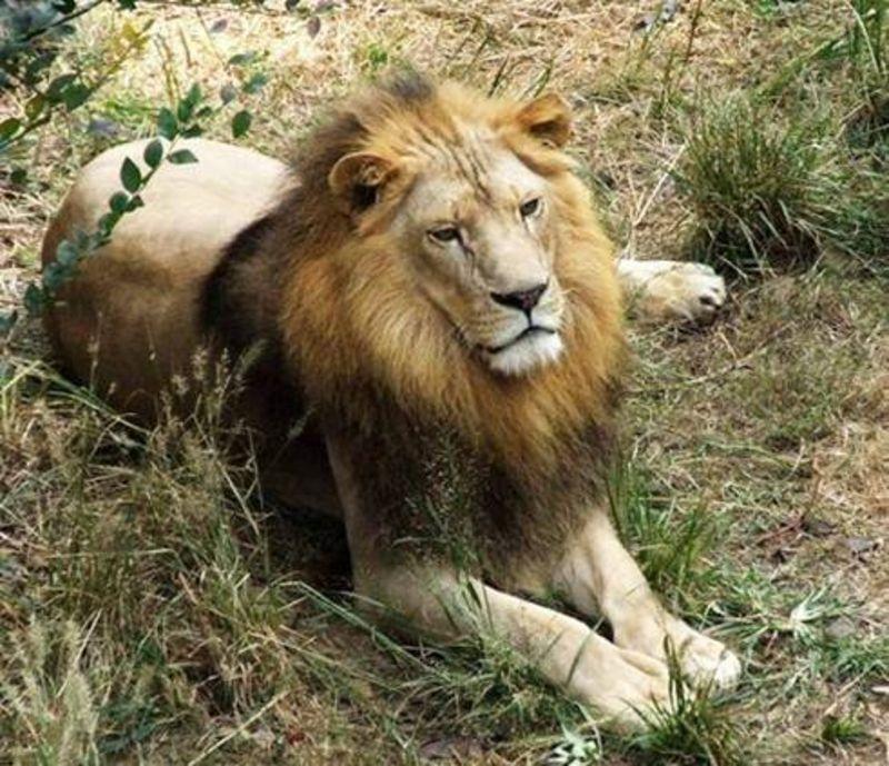 【珍珠泉野生动物生态园门票价格】2015南京珍珠泉园