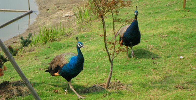 昆山欢乐动物岛图片