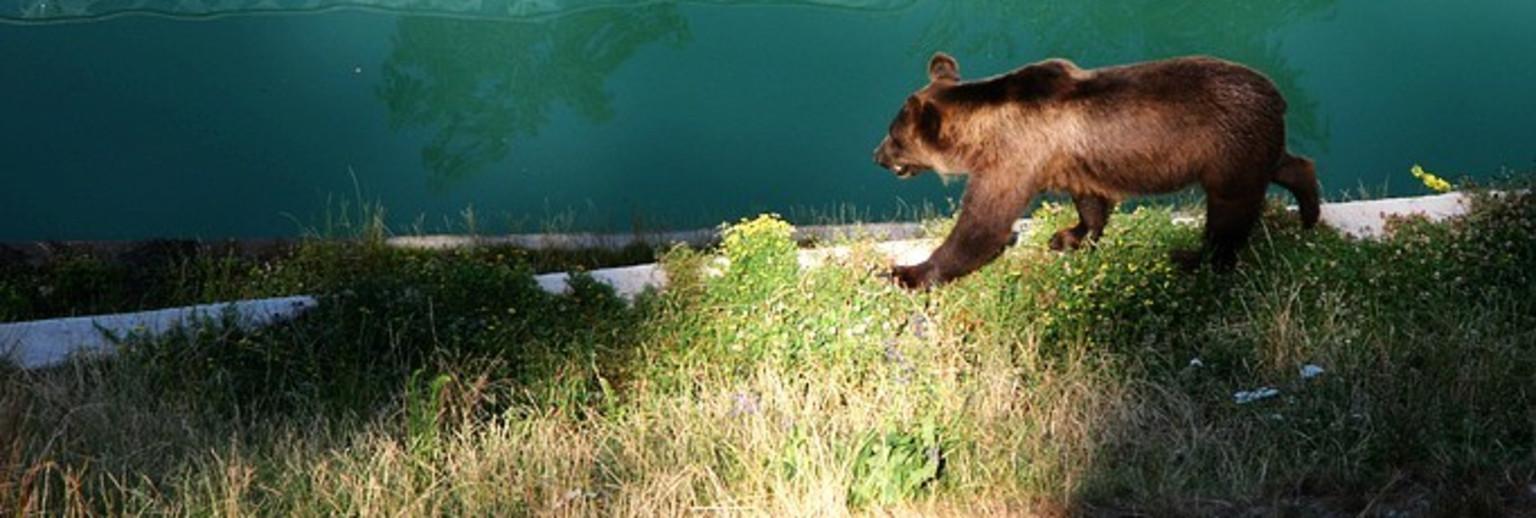 瑞士伯尔尼熊苑