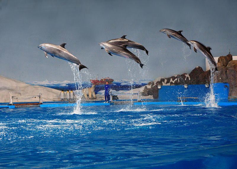 【青岛海昌极地海洋世界图片】青岛海昌极地海洋世界