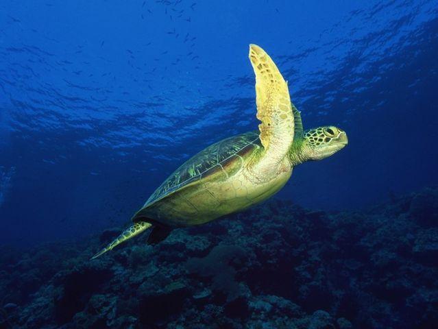太平洋海底世界-科技馆1日游>探索,科普亲子之旅