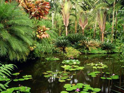 【2018】夏威夷植物园v攻略攻略_夏威夷植物园攻略选厦航座图片