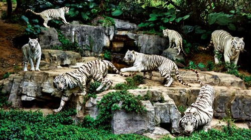 [中秋] 珠海海洋王国-广州长隆野生动物园-顺峰山牌坊