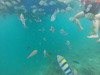 沙美岛不仅有美丽的热带风光和第一流的海泳场,还有那别具特色且价廉
