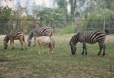 济南动物园地址