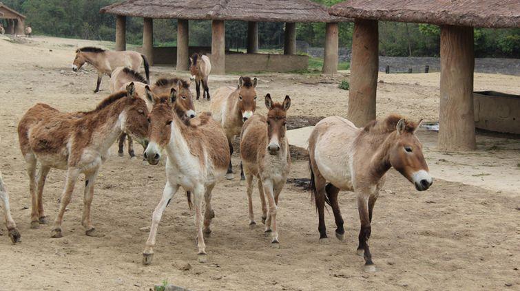 【杭州野生动物世界门票价格】2016杭州野生动物世界