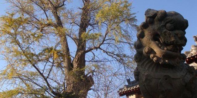 岱庙风景图片