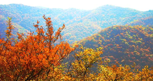 翠枫山自然风景区地处阳泉