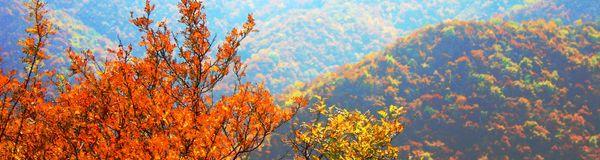 翠枫山自然风景区是阳泉市首次发现的原始次生林.