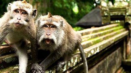 圣猴森林保护区图片
