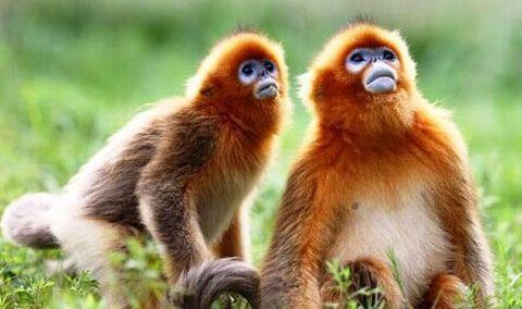 享价值470元的上海野生动物园自驾2日游远离喧嚣,宿上海衡山度假村