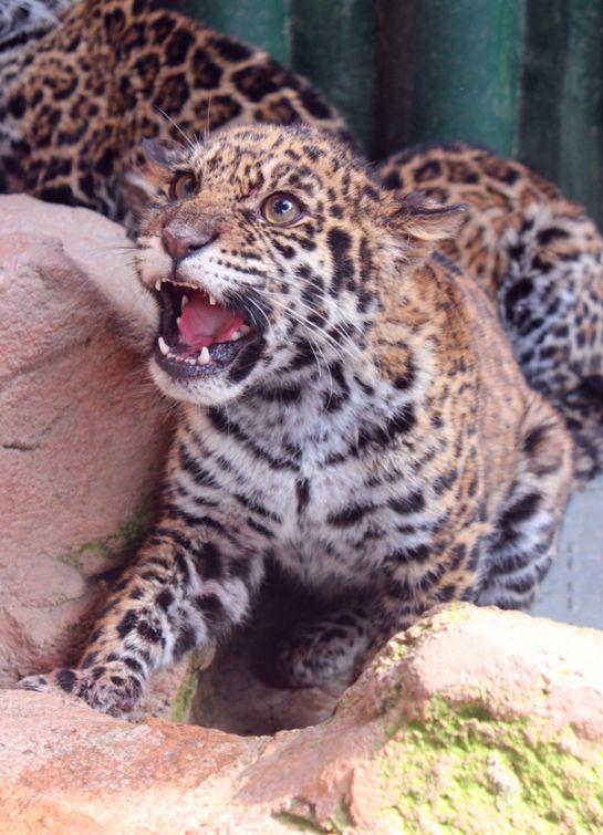 黄昏之时,动物王国的baby们将举行一场盛大的游园会,动物,彩车,小丑