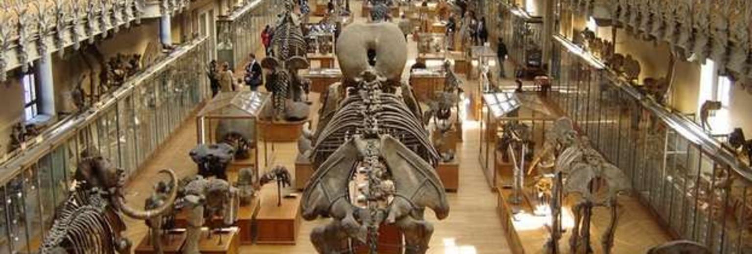 纽约美国自然历史博物馆