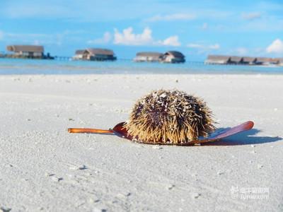 可可拉岛_Cocoa Island_风景2