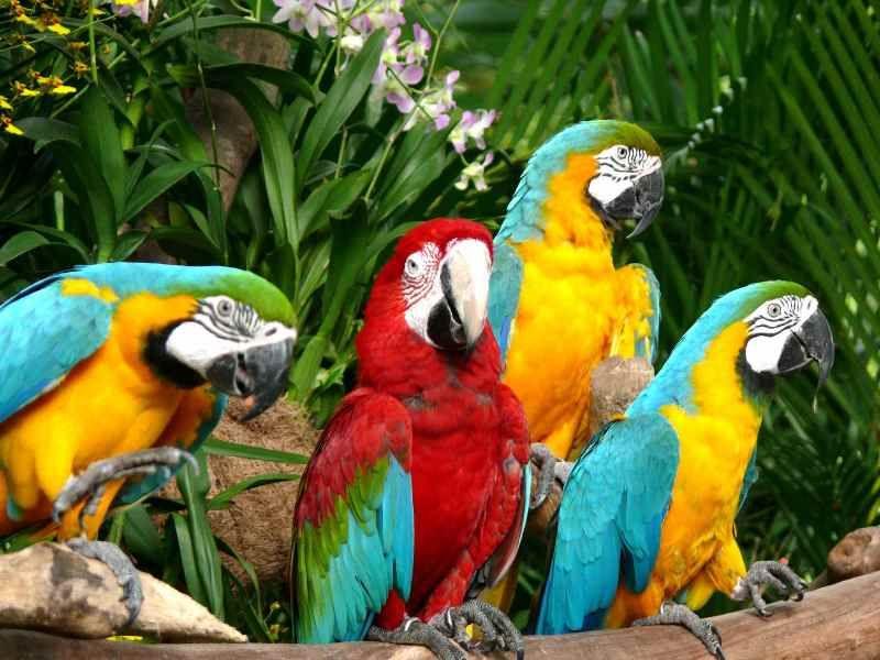 新加坡裕廊飞禽公园