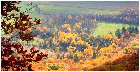 """""""枫""""情万种——找寻加拿大的枫叶情节图片"""