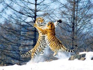 尔滨1日游 登龙塔,看东北虎,游极地馆 当地游