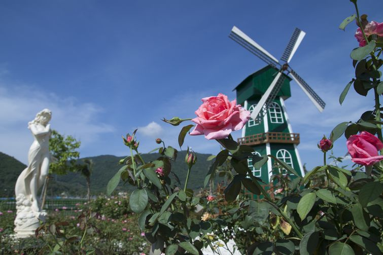 蜈支洲岛(门票 船票) 玫瑰谷(基金 游览车)游>浪漫图片