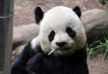 圣地亚哥动物园图片
