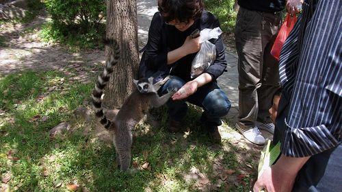 还具备保护和繁育濒危野生动物的科研教育功能,在这里您将科研与大
