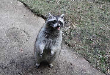 杭州野生动物世界图片