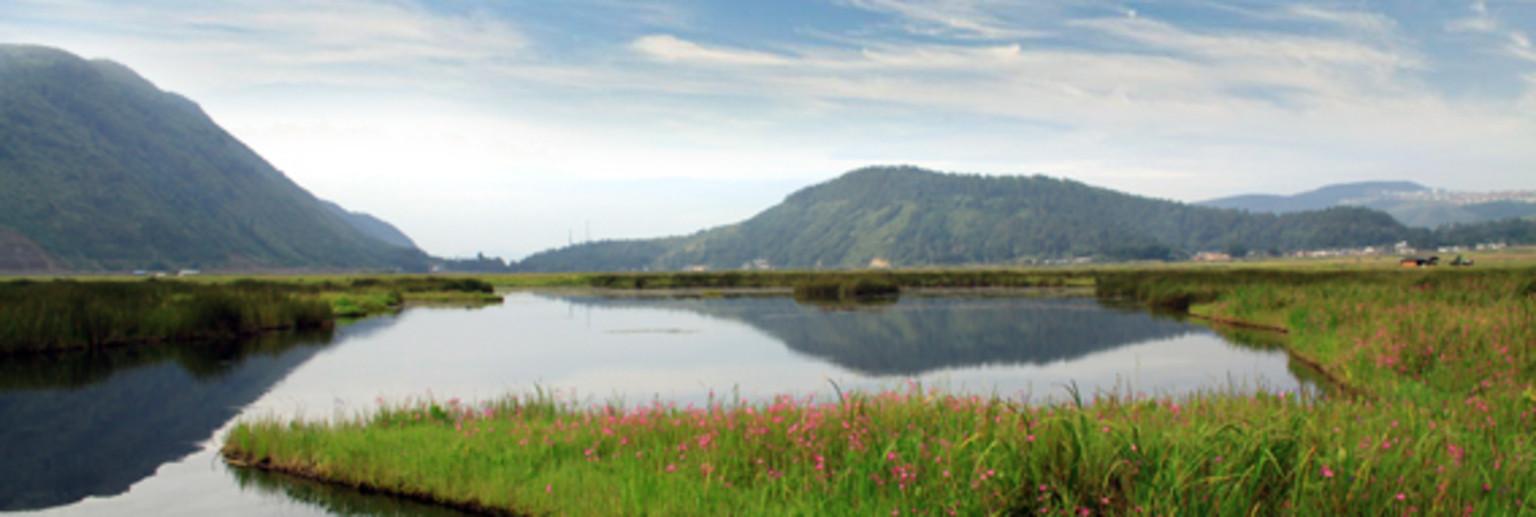 腾冲湿地位于腾冲县城北部,距离县城11公里,海拔为1731米。在1994年被首批公布为中国33个重点保护湿地之一,也是云南省内唯一的一个国家湿地保护区。 面积达到了24439亩,湿地核心区域面积有804亩。是我国西南地区唯一的亚热带火山堰塞湖沼泽湿地,草甸漂浮在整个湖面上,人们称之为草排或者海排。由各种水草的草须经过千万年的生长不断串接而成,草排厚度在全国范围内非常罕见。