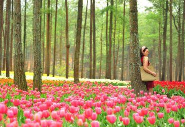 大木林下花园图片