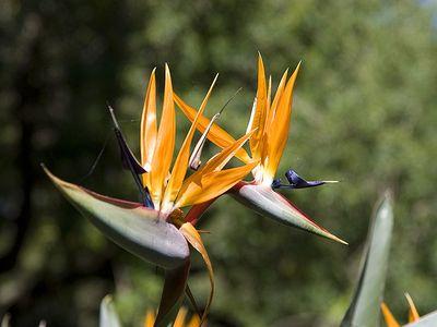 悉尼皇家植物园植物
